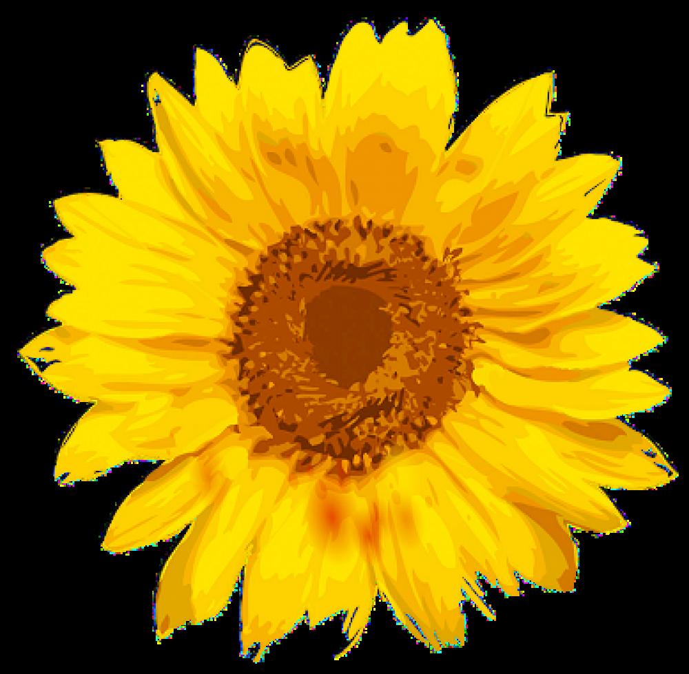 Napraforgók logo